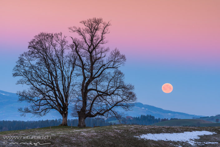 Schallenberg Baum Mond