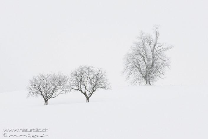Schoenenberg Winter Baeume