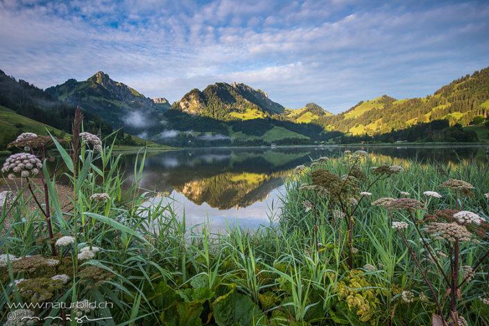 Schwarzsee Spiegelung Fribourg