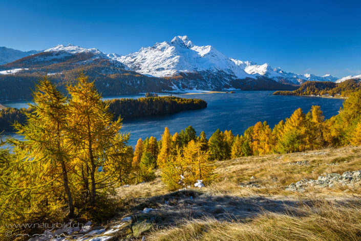 Silsersee Engadin Herbst