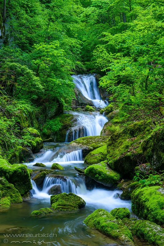Twannbachschlucht Schlucht Wasser
