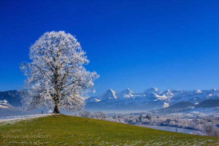 Uebeschi Baum Berge