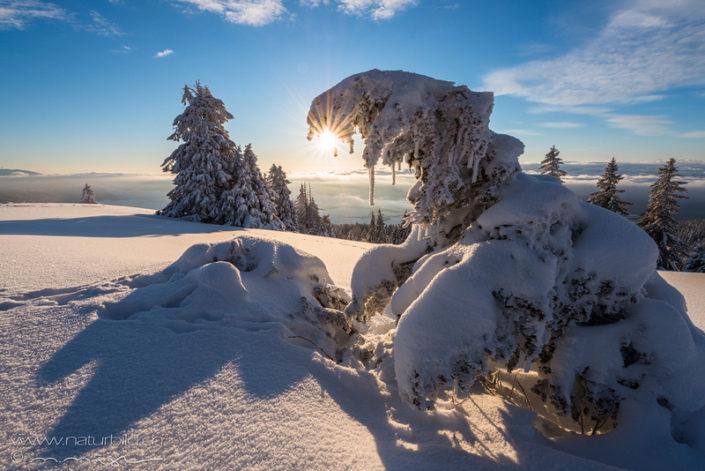 Jura Schnee Nebelmeer