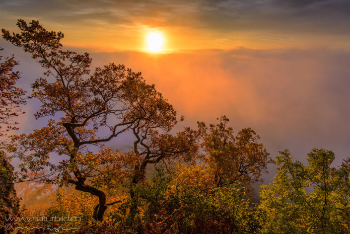 Sonnenaufgang Nebel Aargau
