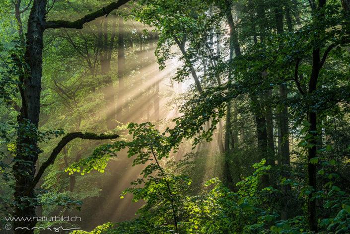 Stimmung Wald Sonnenstrahlen