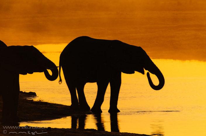 Elefant Fuss Afrika