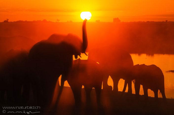 Elefanten Afrika Sonnenuntergang