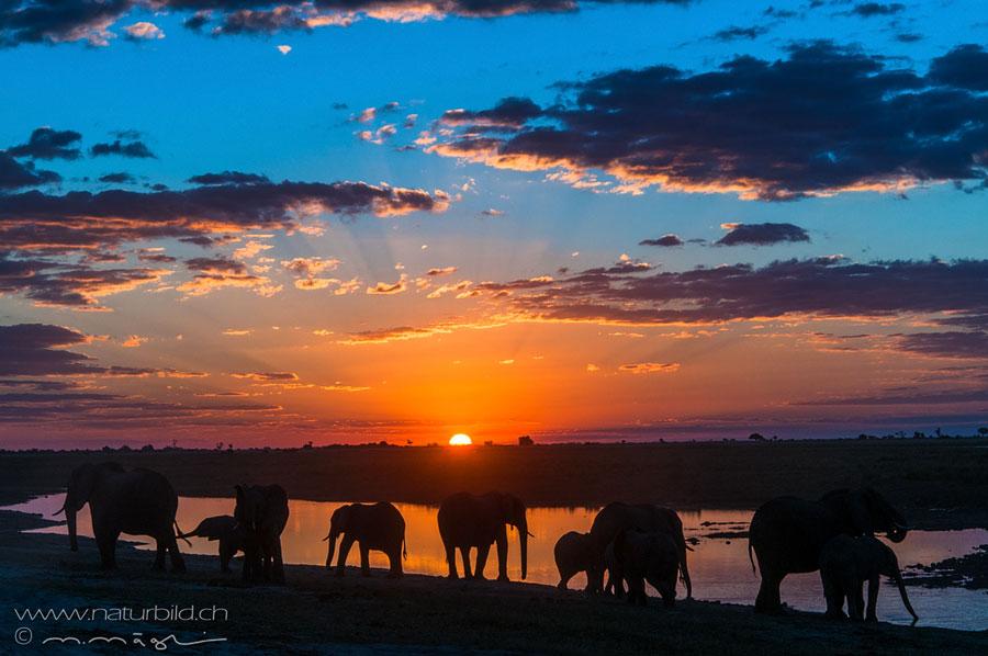 Tiere Afrikas Naturbild Ch