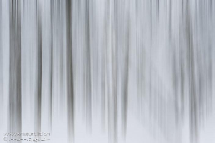 Wald Bäume verwischt