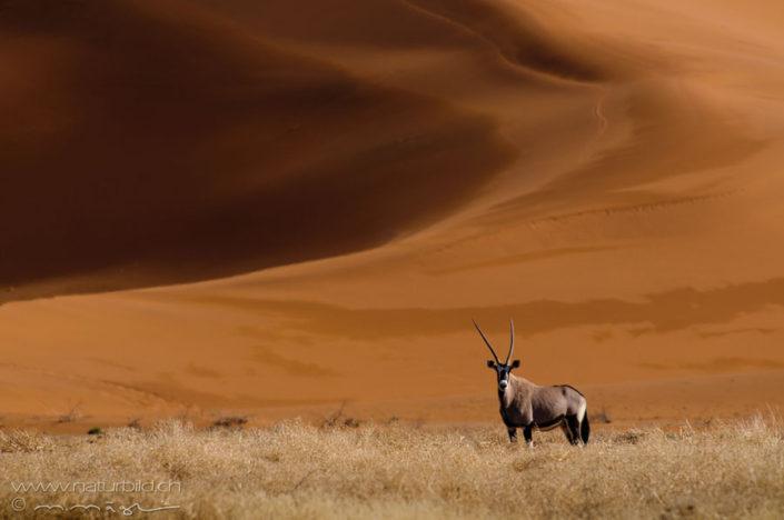 Oryx Duene Tier