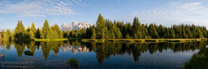 Panorama Grand Teton Tannen Spiegelung