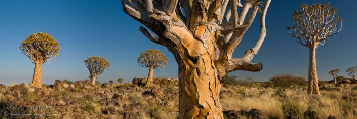 Panorama Koecherbaumwald Namibia Baeume