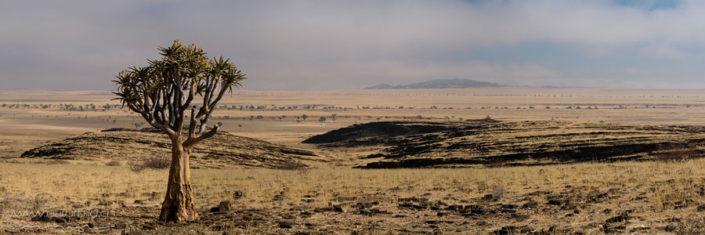 Panorama Namib Rand Baum