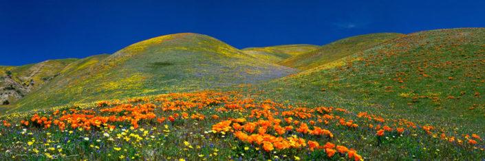 Panorama Tehachapi Mountains Blumenhuegel Nordamerika