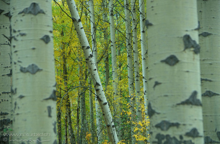 Wald Baumstaemme Pflanzen