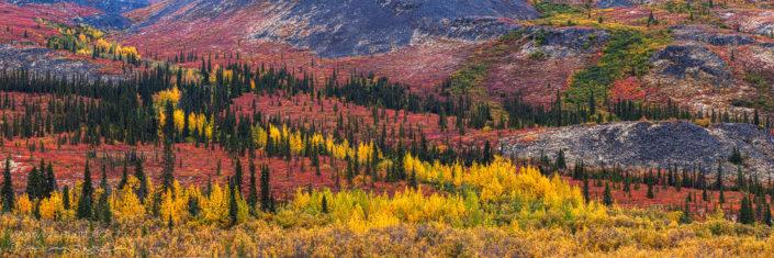Panorama Yukon Canada