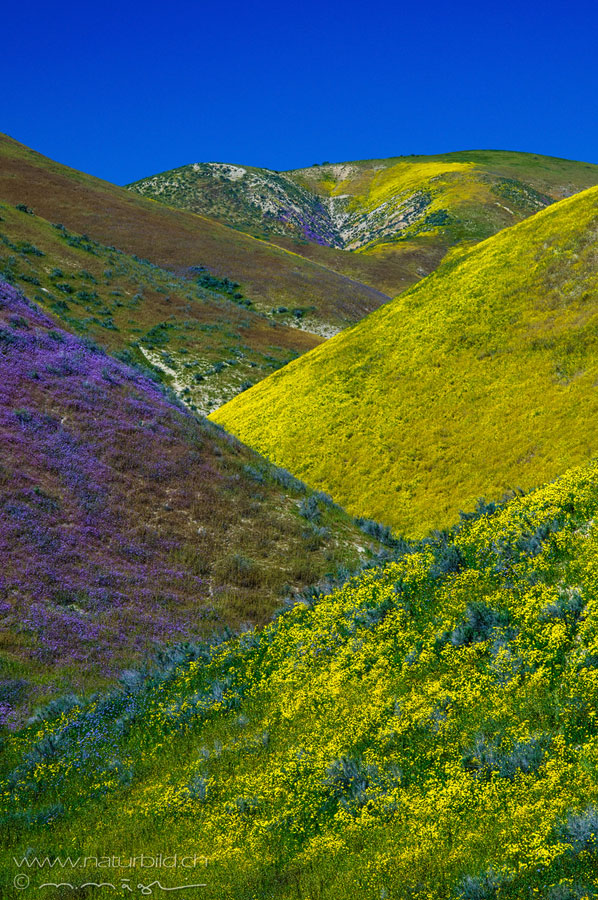 Carrizo Plain Nordamerika Huegel