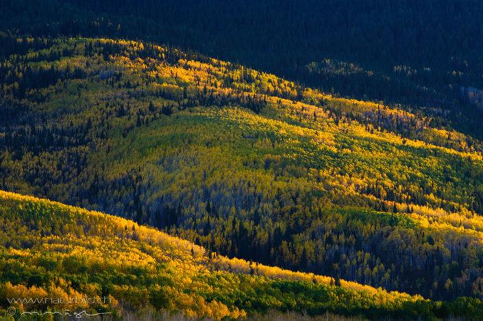 Colorado Wald Nordamerika