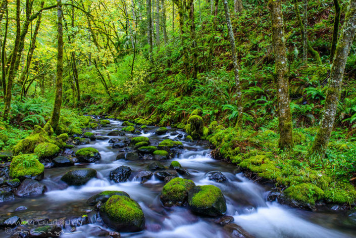 Columbia River Gorge Bach Wald