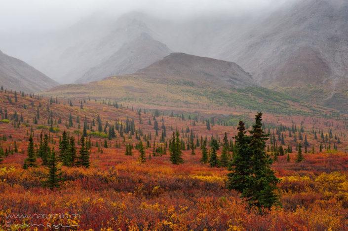 Denali Nordamerika Wildnis