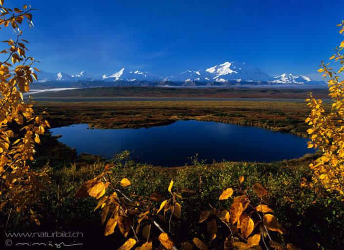 Denali See Herbst