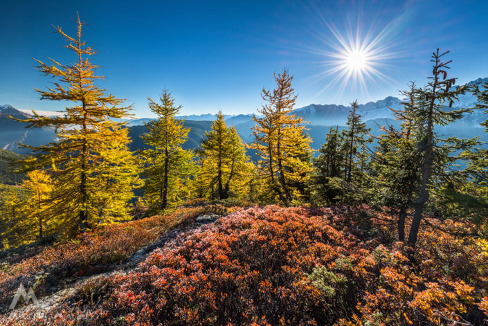 Wallis Emosson Herbst