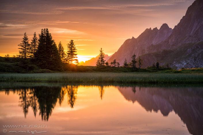 Sommer Grindelwald Berner Oberland