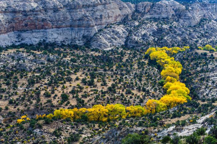 GSENM gelbe Baeume Utah