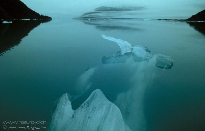 Harriman Fjord Eisschollen Alaska