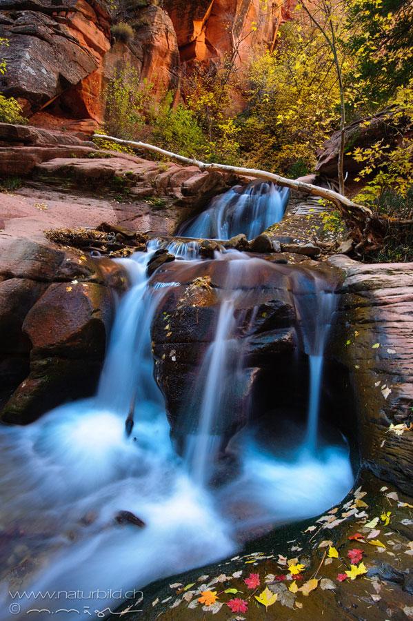 Kanarra Creek Herbst Zion