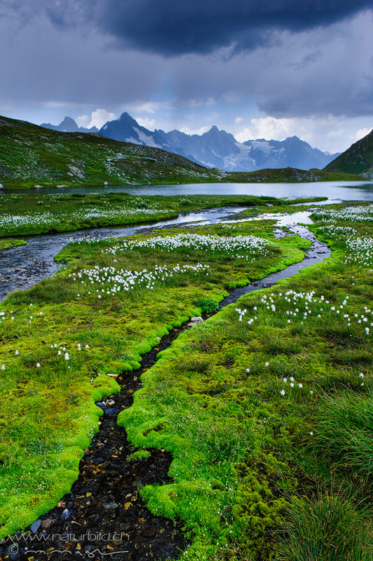Lacs de fenetre Wallis Bach
