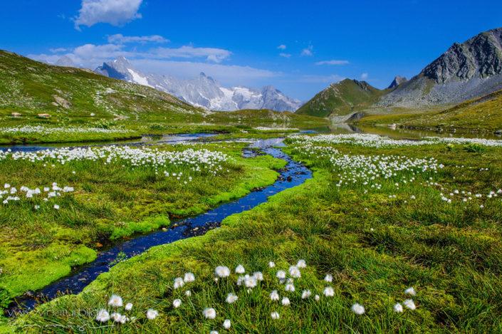 Lacs de fenetre Bach weisse Blumen
