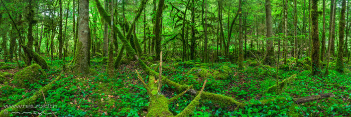 Panorama Wald Baeume