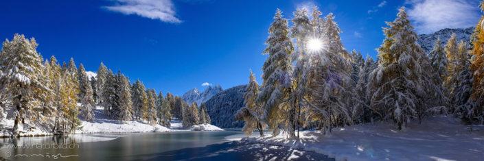 Panorama Albula Schnee Bach Tannen
