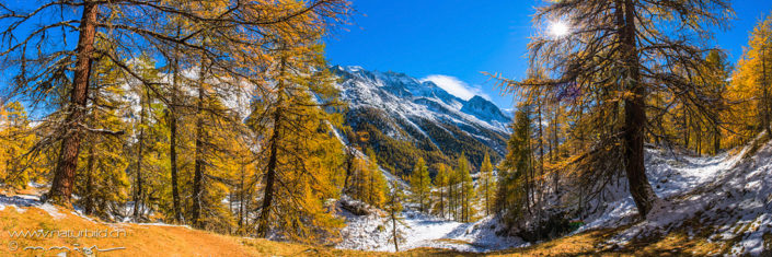 Panorama erster Schnee Tannen Herbst