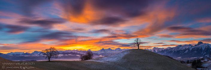 Panorama Sonnenaufgang Berner Alpen