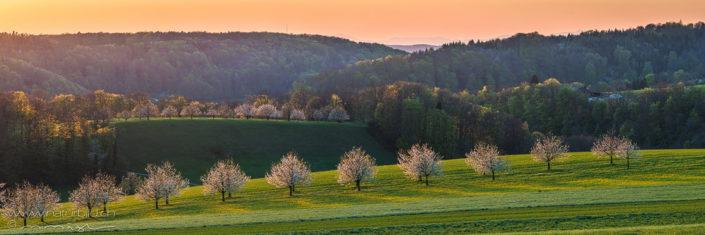 Panorama bluehende Baeume Wiesenlandschaft