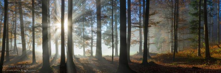 Panorama Wald Sonnenstrahlen