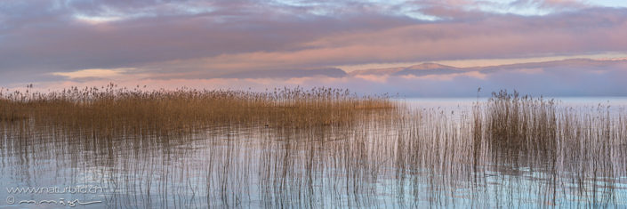 Panorama Seeufer Schilf