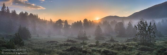 Panorama Glaubenberg Waldlichtung Sonnenuntergang