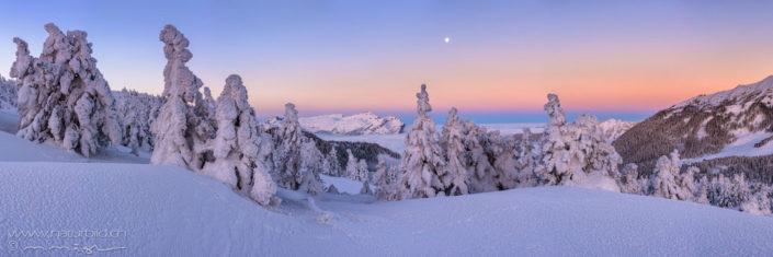 Panorama Maerchenlandschaft verschneite Tannen