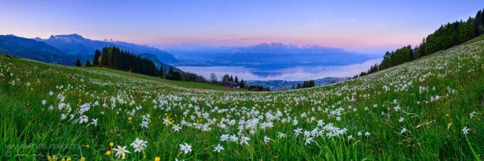 Panorama Les Pleiades Blumenwiese