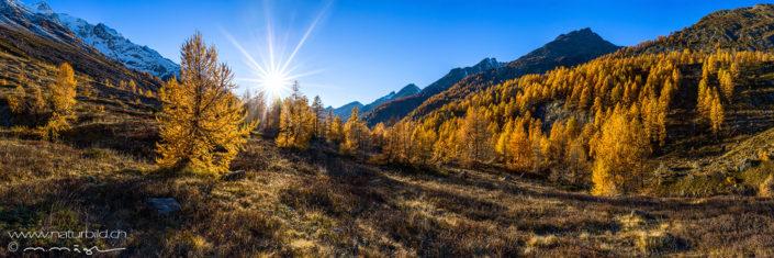 Panoramabild Lötschental Herbst