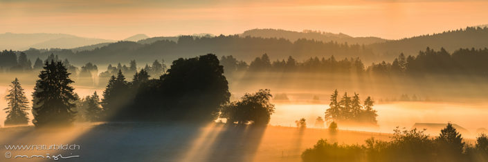 Panorama Sonnenstrahlen Baumlandschaft