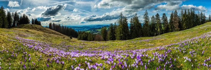 Panorama Fruehling Bergblumen