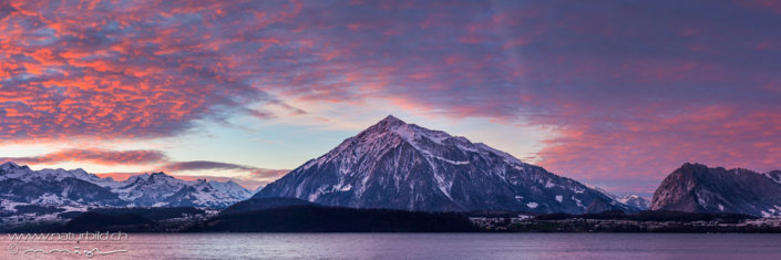 Panorama Niesen Abendrot Winter Thunersee