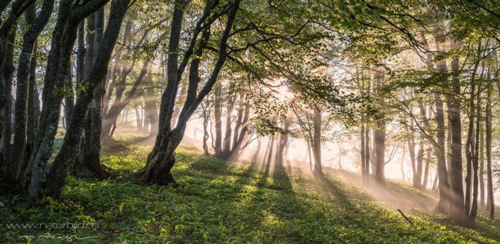 Panorama Waldlichtung Sonnenstrahlen