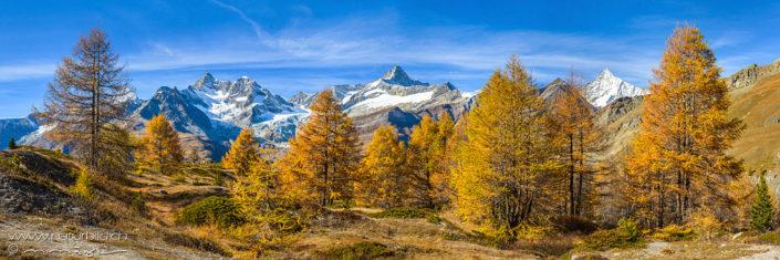 Alpenpanorama Herbst Tannen