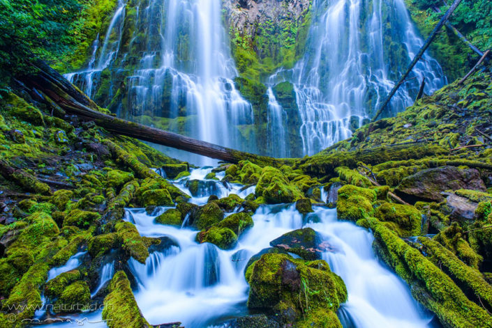 Proxy Falls Oregon Wasserfall