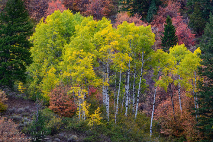 Snake River Canyon Herbst Wald